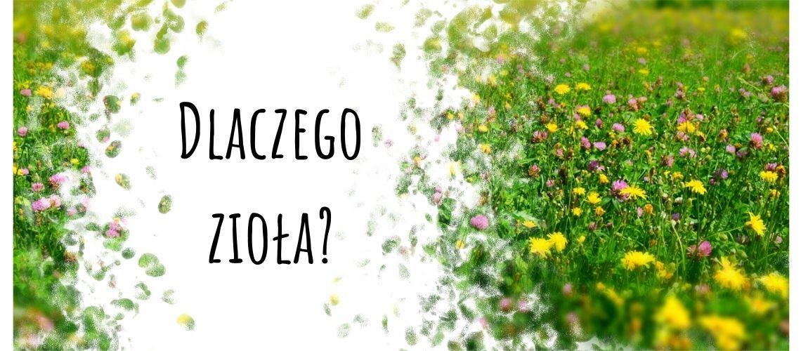dlaczego warto sięgać po zioła