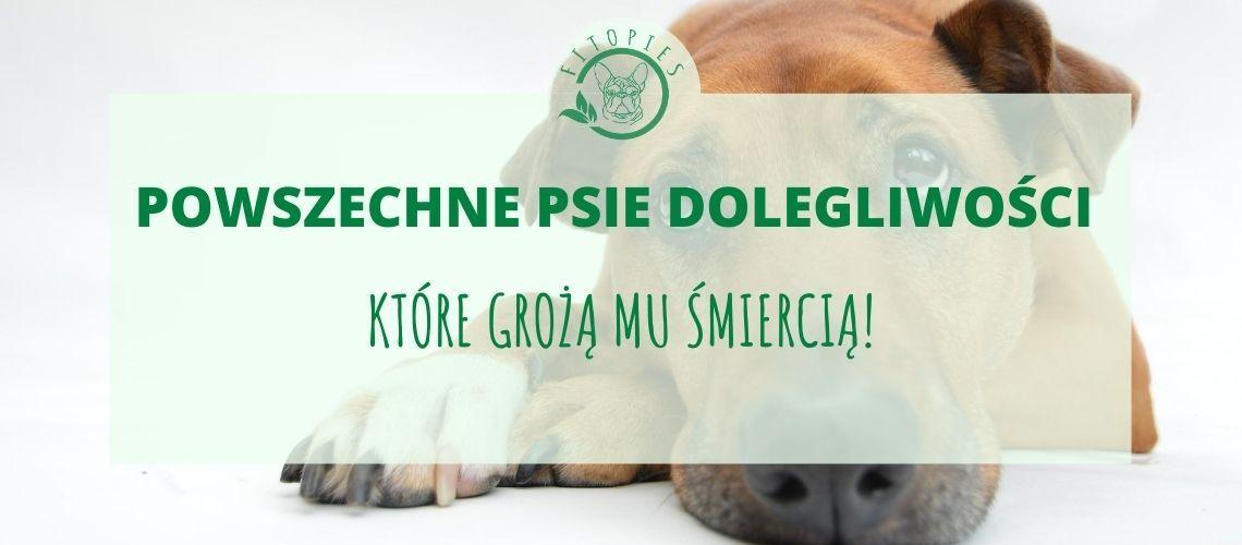 3 choroby skracają psu życie