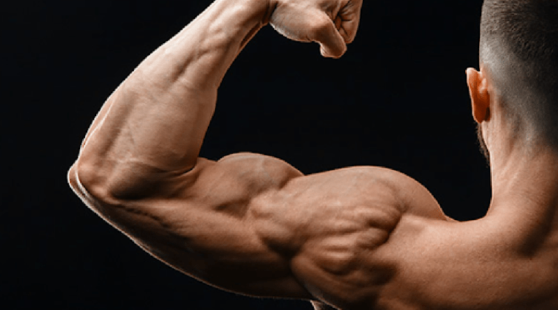 Strong Arm From Bicep Curls and Triceps Extension