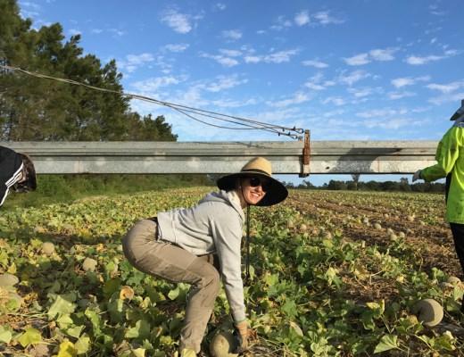 picking-ferme-australie-fit-your-dreams