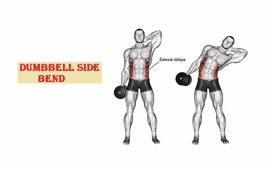 Dumbbell side bend - fitzabout