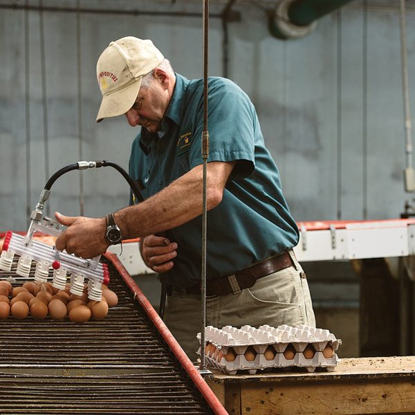 14-09230_5AF_7486_B_3Csmw17-600x600 Farm to Shelf: How Our Cage Free Eggs Get To You