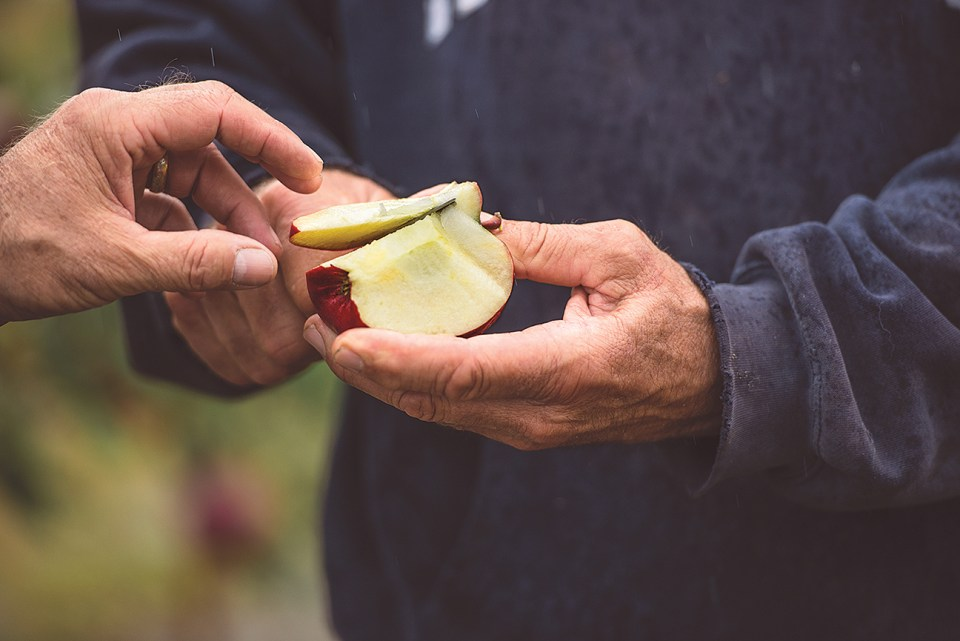 Apple Tasting - Five Acre Farms