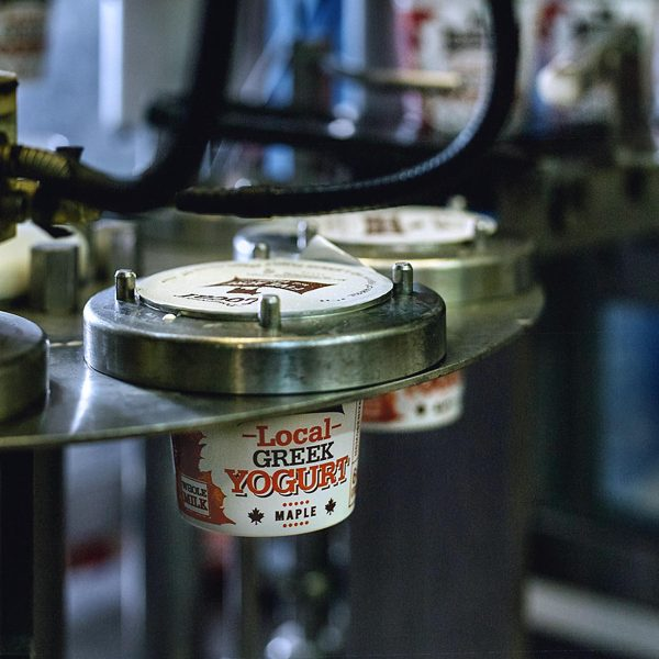 Containers of our Local Greek Maple Yogurt coming off the filling machine.