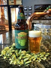 Pint, bottle, and hops in brewery