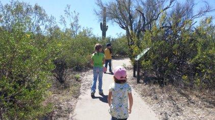 Hiking in Saguaro National Park