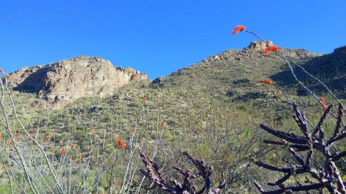 Pima Canyon, Tuscon, AZ
