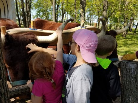 Oxen ride in Nauvoo