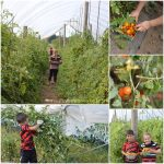 Tomato Jam Recipe| Five Senses Palate