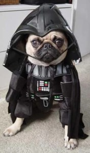 dog-darth-vader-costume-7