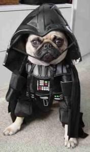dog-darth-vader-costume-7