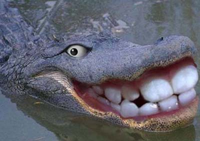 Happy-Crocodile-Funny-Animals