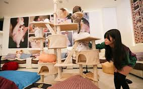 catcafe1