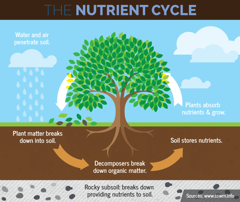 Three Year Garden Rotation Plan: The Nutrient Cycle