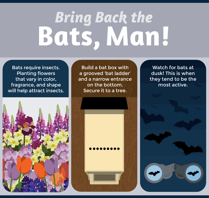 Attracting Bats to Night Gardens