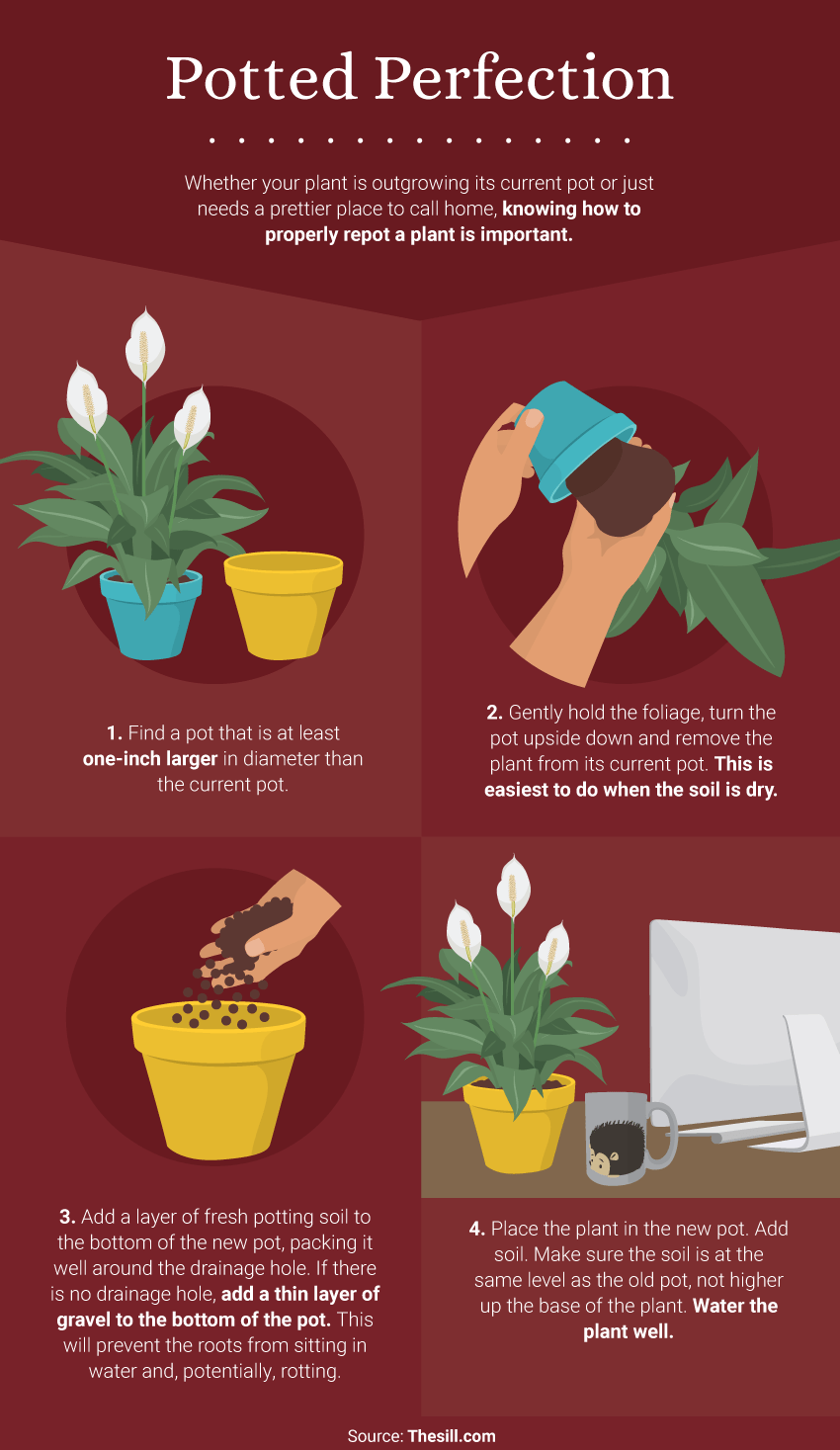 Potted Perfection - The Benefits of Office Plants