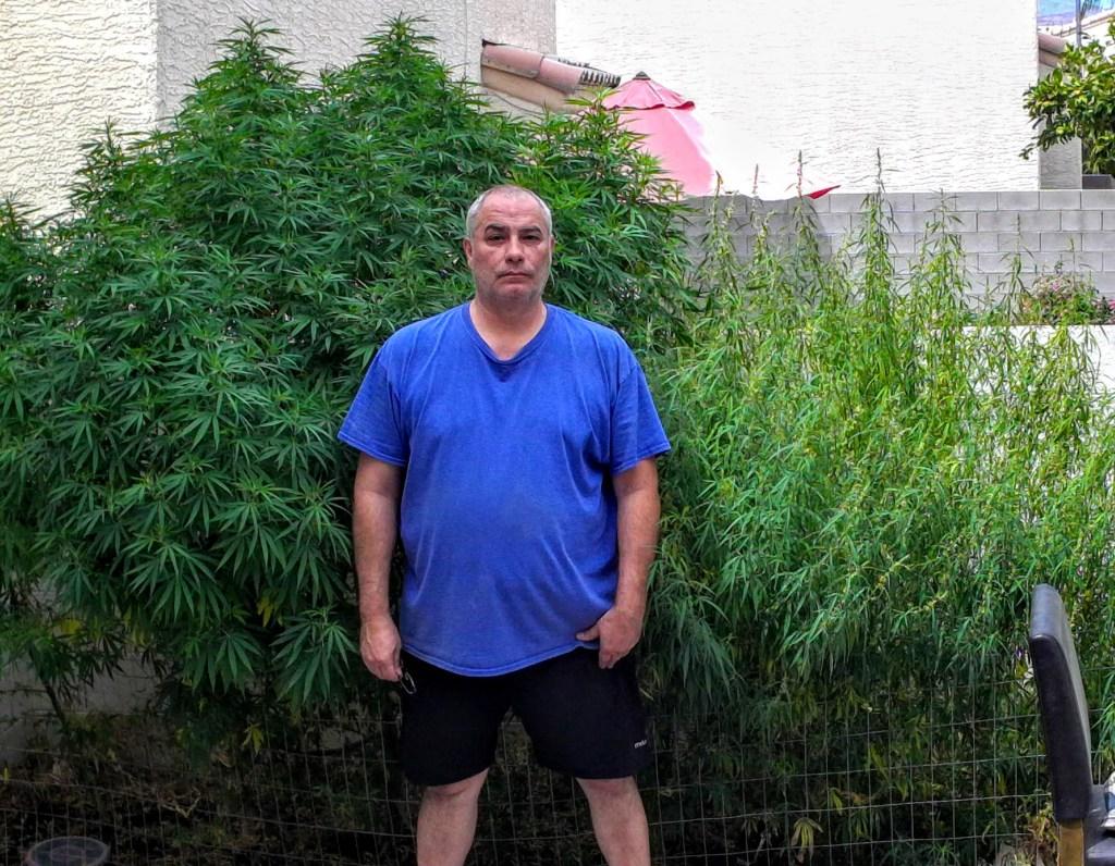 cannabis desert plants