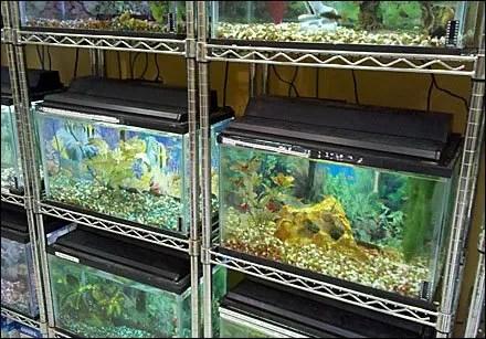 Metro Super-Erecta Shelf As Aquarium Display