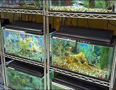 Metro Shelf Fish Tank Racks