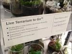 Terrarium to Go CloseUp