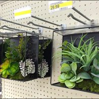 Succulents on Scan Hooks