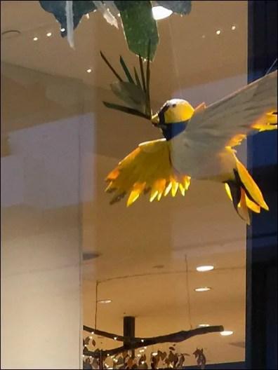 Peacock Window Dressing Main 3