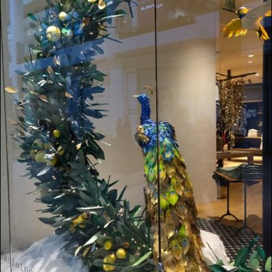 Peacock Window Dressing Main