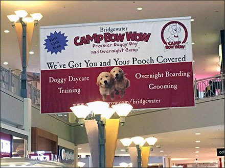 Camp-Bow-Wow First Visit Free Banner