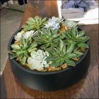 Succulent Plant Staging as Retail Concept
