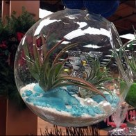 Free-Floating Plant Globes 4