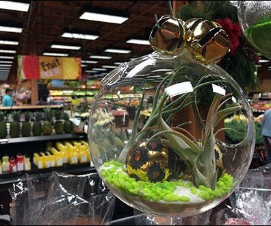 Free-Floating Plant Globes 6