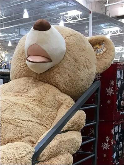 Jumbo Floppy Bear Bulk Bin 3