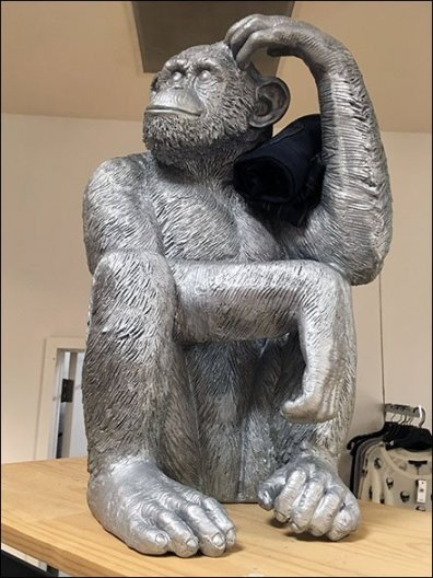 Monkey Thinking of Jeans 3