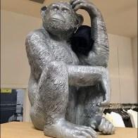 Monkey Thinking of Jeans Main