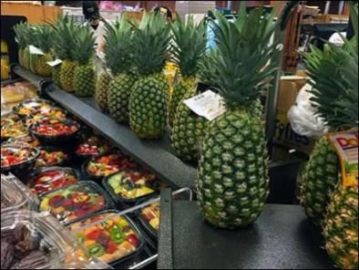 Pineapple Hedge 3