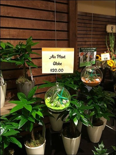 Air Plant Globe Fishing Line Presentation 1