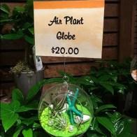 Air Plant Globe Fishing Line Presentation 2