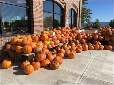 pumpkin-cascade-2