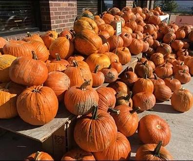 pumpkin-cascade-3