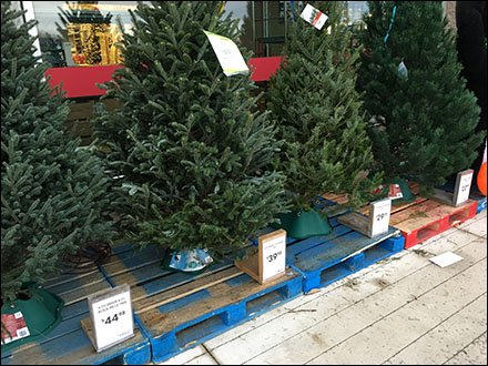 Do-It-Yourself Christmas Tree Pricing System