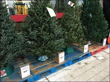 do-it-yourself-christmas-tree-id-kit-main