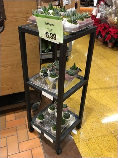 life-trends-air-plant-end-table-2