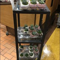 life-trends-air-plant-end-table-3