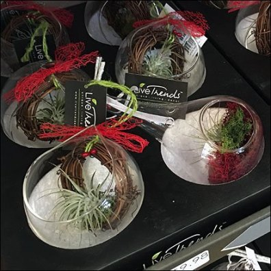 livetrends-magnetic-air-plant-display-feature