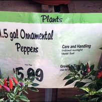 Don't Give Flowers Give Ornamental Peppers