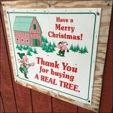 helen-eds-tree-farm-service-counter-3