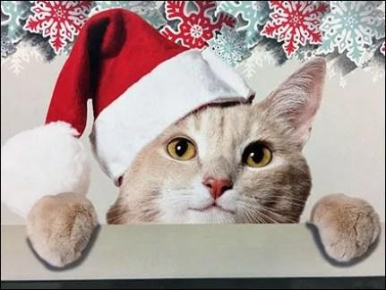 Tastey Tree Climber Christmas Treats
