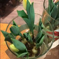 Winter Seasonal Plant Sales In Grocery