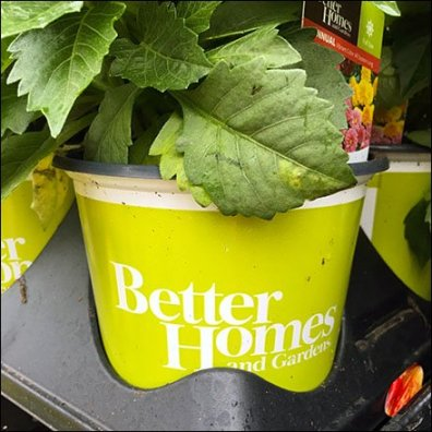 Better Homes And Gardens Branded Flowers