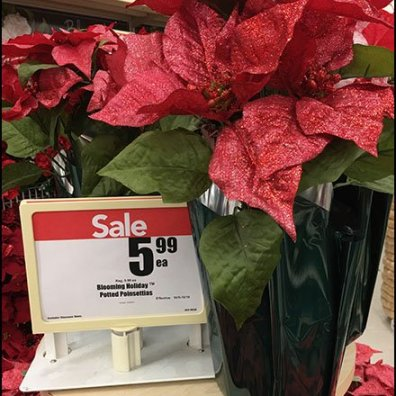 Poinsettia Pre-Season Plant Christmas Promotion